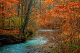 Woodland Stream (Revisited) by SatCom, Photography->Landscape gallery