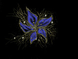 Blue Flower by gabriela2006, abstract gallery