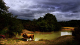 HIGHLAND BULL ENCOUNTER by LANJOCKEY, photography->landscape gallery