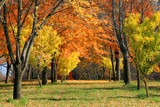 Maple Grove by Silvanus, photography->landscape gallery
