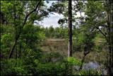 Davis Bayou by allisontaylor, Photography->Landscape gallery