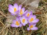 Spring Awakening by utshoo, Photography->Flowers gallery