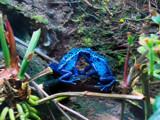 Secrets by wheedance, photography->reptiles/amphibians gallery