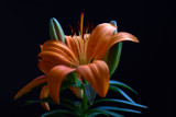 Orange Lilium 3 by elektronist, photography->flowers gallery