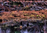 Beaver Lodge by snapshooter87, photography->nature gallery