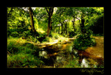 The Dalby Forest - colour version by JQ, Photography->Landscape gallery