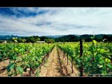 Good Afternoon Napa Valley! by ajmitchell, Photography->Landscape gallery