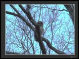 Owl by nessalovesnature, Photography->Birds gallery