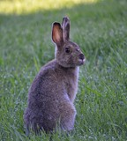 Just Hopping By to Say Hello by icedancer, photography->animals gallery
