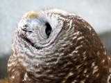 Talons XVIII by Hottrockin, Photography->Birds gallery