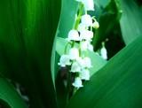 Hidden Treasure by Little_Art_Gurl, photography->flowers gallery
