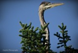 Big bird by GIGIBL, photography->birds gallery