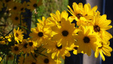 A Bright Friday by jerseygurl, photography->flowers gallery