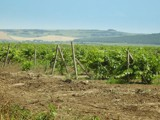Wine is comming by sunnymay, Photography->Landscape gallery