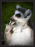 anyone for a manicure? by JQ, Photography->Animals gallery