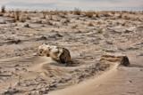 Delaware Sand Dune by Jimbobedsel, photography->landscape gallery