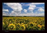 Summer II by kodo34, Photography->Landscape gallery