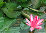 Green & Pink by sadun, Photography->General gallery
