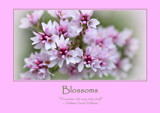 Blossoms Poster by LynEve, photography->general gallery