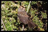 Lady Bird by garrettparkinson, photography->birds gallery