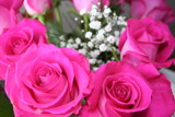pink roses by MissTish, Photography->Flowers gallery
