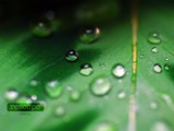 Droplet by Samatar, Photography->Macro gallery