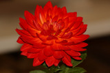 The Beauty Of The Dahlia _ Third Posting by tigger3, Photography->Flowers gallery