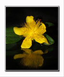 Little Yellow Flower by shedhead, photography->flowers gallery