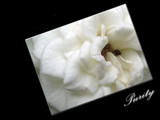 **Purity** by June, Photography->Flowers gallery