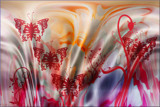 Butterfly Dream by LynEve, abstract gallery
