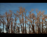 Trees by MiLo_Anderson, Photography->Landscape gallery