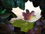 Leaf Window by CaptainHero, Contests->Manip Contest gallery