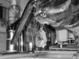 Thirsty Girl by Naturalone, photography->pets gallery
