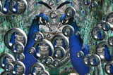 Peacocks ball by Paul_Gerritsen, Photography->Manipulation gallery
