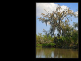Swamp King by rmoses09, Photography->Landscape gallery