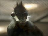 A Self Portrait by Jimbobedsel, photography->animals gallery