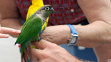 Rescued Parrots by Skynet5, Photography->Birds gallery