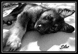 Silas by lilu103, photography->pets gallery