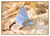butterfly by ferit, Photography->Butterflies gallery