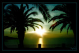 Palms by JQ, Photography->Sunset/Rise gallery