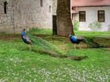 Buddies by Tedi, photography->birds gallery