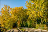 Autumnal 'Tunnel' Entrance by corngrowth, photography->nature gallery