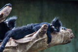 Whew, Made It! by Pistos, photography->animals gallery