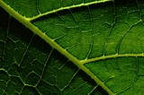the leaf by ro_and, photography->macro gallery