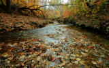 Autumn Stream by SinaiB, Photography->Landscape gallery