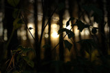 Glimpse by BluePawAk, Photography->Nature gallery