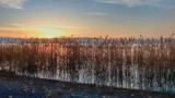 Autumn Reeds at Sunset by koca, photography->sunset/rise gallery