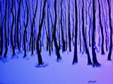 WINTER by nuke88, abstract gallery