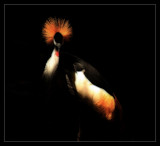 """C"" Crane by Jimbobedsel, Photography->Birds gallery"
