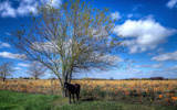 Amish Pumpkin Patch by 0930_23, photography->landscape gallery